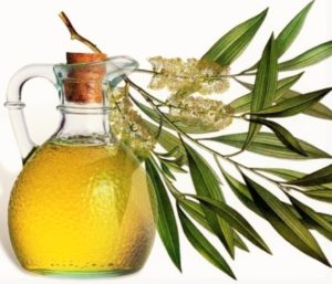 čajovníkový olej